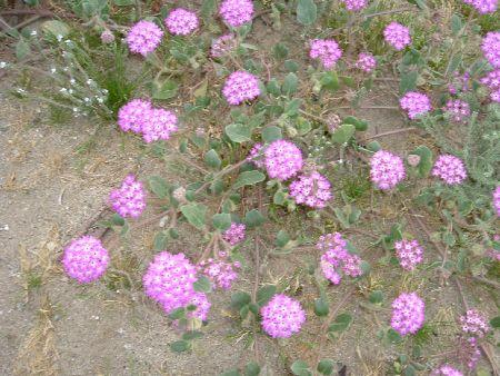psflowers.jpg